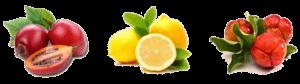 Шиповник мальгипия лимон