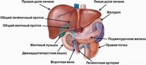 Печень. Гормональный фон женщины в период предменопаузы и в менопаузе