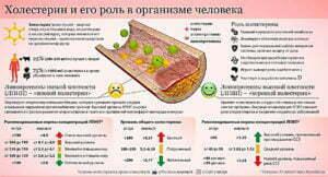 Роль холестерина в организме селовека. Развитие атеросклероза