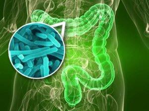 Барьерное действие микрофлоры кишечника