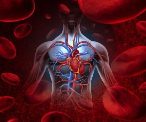 Улучшение деятельности системы кровообращения